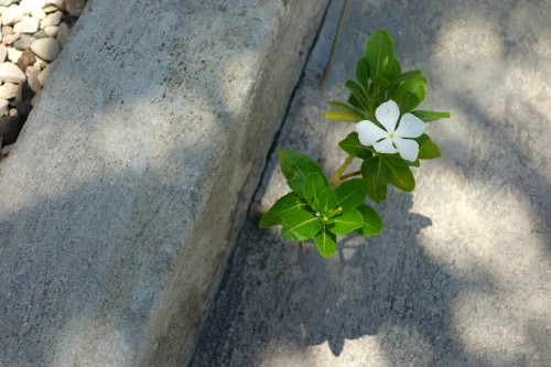 Concreteflower