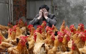 Chickendealer