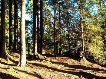 winterwoods02.jpg